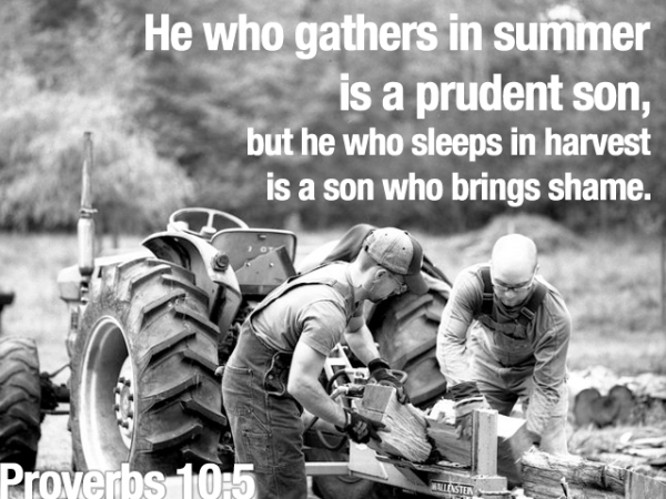 He who gathers in summer is a prudent son, but he who sleeps in harvest is a son who bring shame.